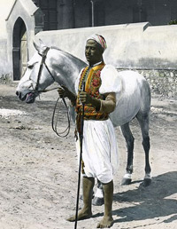 horse-africaasia.jpg