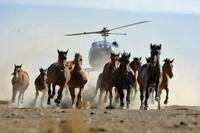 horse-copter.jpg