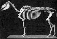 horse-skeleton.jpg