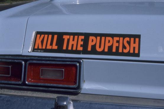 KILL THE PUPFISH bumper sticker, circa 1970. | Photo: Phil Pister collection.