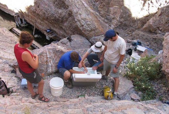 Collecting pupfish from Devils Hole, Ash Meadows NWR. | Photo: USFWS.