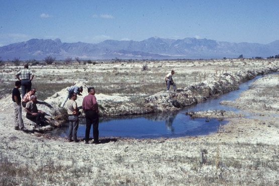 Jackrabbit Spring being drawn down by excessive pumping in 1969. | Photo: Phil Pister collection.