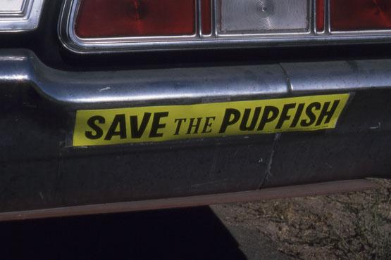 SAVE THE PUPFISH bumper sticker, circa 1970. | Photo: Phil Pister collection.