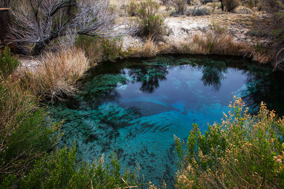 The restored Ash Meadows Crystal Spring today. | Photo: Kim Stringfellow.