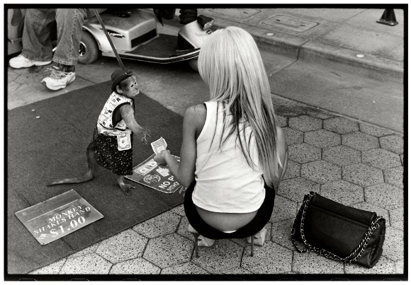 """Women and Monkey in Santa Monica"" from the book ""Wayward Cognitions."" 