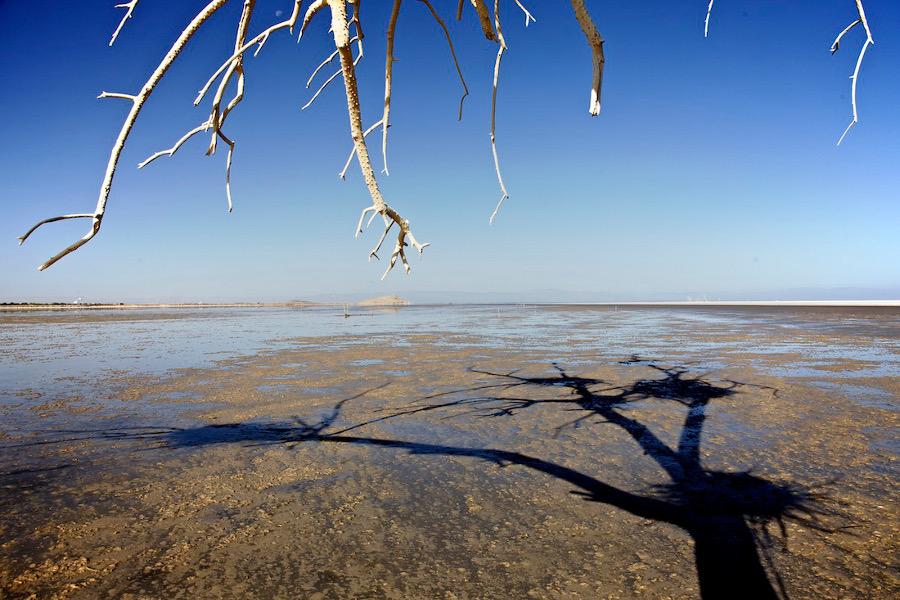 """Dead Tree, Bird Nests & Shadow."" Salton Sea, CA. 2014. | Photo: Osceola Refetoff."