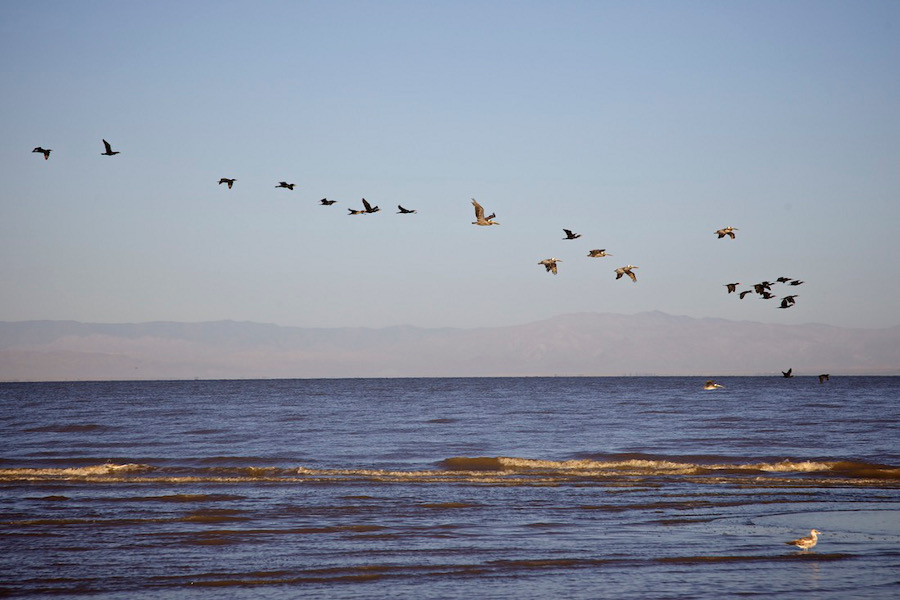 """Birds off Red Hill Marina."" Salton Sea, CA. 2014. | Photo: Osceola Refetoff."
