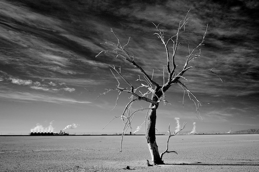 High & Dry: The Salton Sea and the Search for Solutions to the