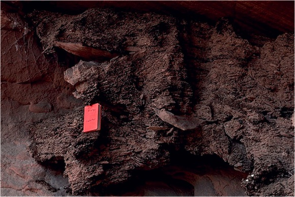 A giant 28,000+ year old packrat midden under an overhang at Capitol Reef National Park. | Photo: USGS.