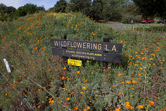 "Site #22, Los Angeles County Arboretum & Botanic Garden, after | Fritz Haeg, ""Wildflowering L.A.,"" 2013-2014.  A LAND (Los Angeles Nomadic Division) Exhibition. Image courtesy of Isabel Avila"
