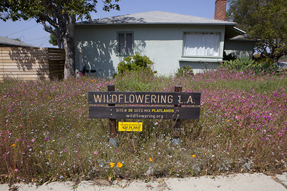 "Site 28, Baldwin Hills, after | Fritz Haeg, ""Wildflowering L.A.,"" 2013-2014.  A LAND (Los Angeles Nomadic Division) Exhibition. Image courtesy of Isabel Avila"