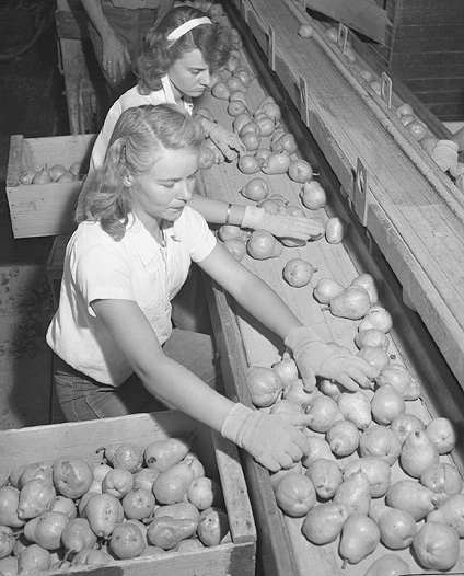 Workers sorting pears, Bones & Son packinghouse, Littlerock , CA 1946. | Source: Wikipedia