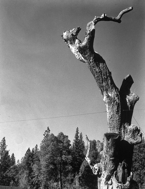 """Hangmans Tree"" (view from the road). 