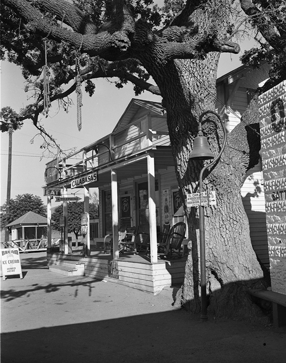 "The ""Hanging Tree"" in Calabasas, Los Angeles County, 1939. 