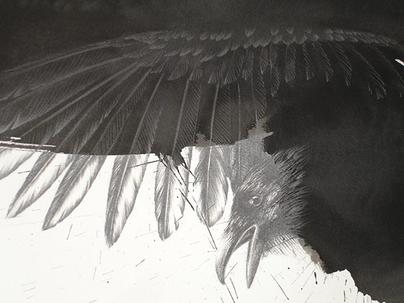 """Raven for PN"" (detail), by Joanne Julian, 2010, graphite and ink on Arches paper, 42x30"" 