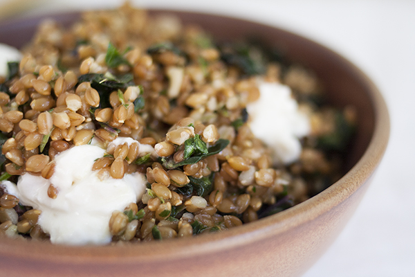 Warm Farro and Red Kale Salad with Burrata
