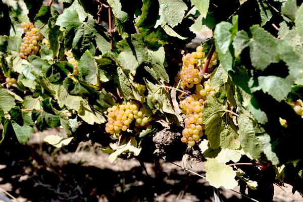harvest15-600-400