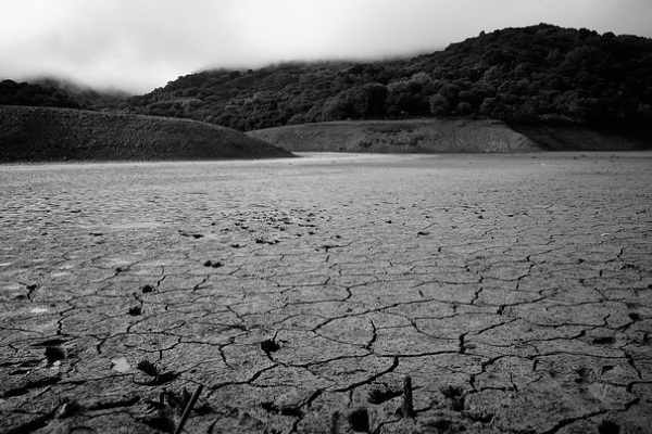 droughtsalmon1