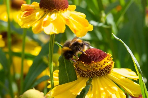 pollinate1-600