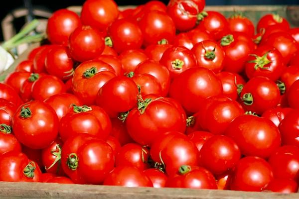 tomatotwitter