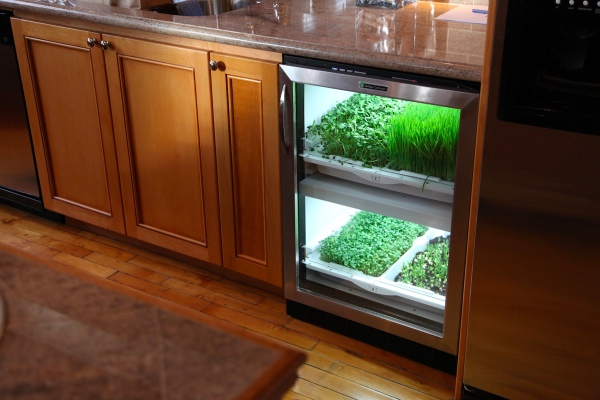 Grow Your Own Microgreens Indoor Year Round Kcet