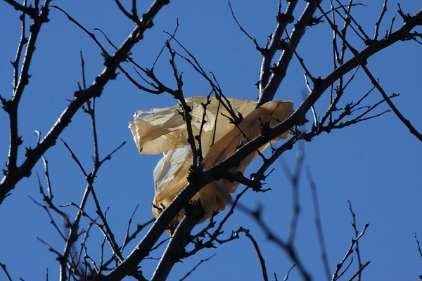 A plastic bag in a tree.