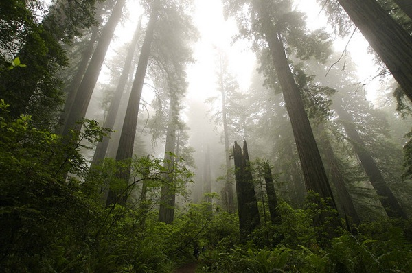 Del Norte Coast Redwoods State Park was one of the many state parks threatened by closure due to budget contraints in past years.