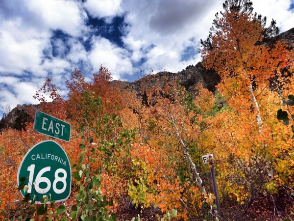 Peaking color across from Sabrina Campground. | Photo: Zach Behrens/KCET