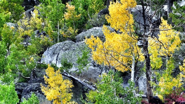 Granite boulders and aspens turning lime green and yellow near Willow Campground. | Photo: Zach Behrens/KCET
