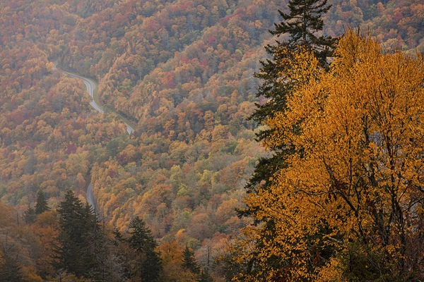 Fall color in Great Smoky National Park.