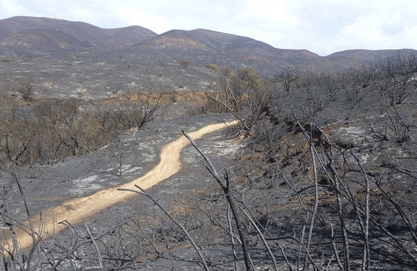 The landscape around the La Jolla Trail after the Springs Fire. | Photo: Courtesy National Park Service