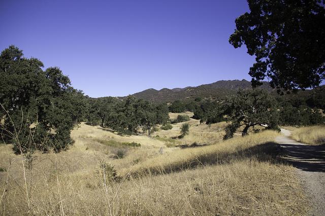 ticks-santa-monica-mountains