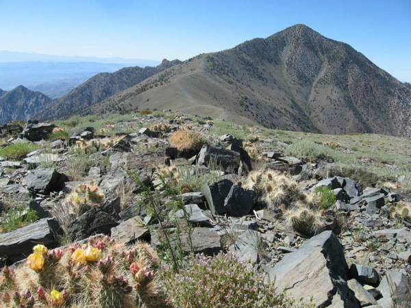 Wildflowers near Telescope Peak. | Photo: Courtesy National Park Service
