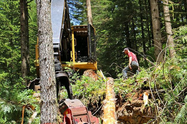 timber-harvests-12-29-14-thumb-630x420-85840