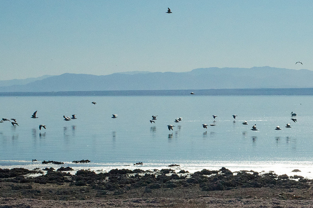 Why Don T Californians Care About Saving The Salton Sea Kcet