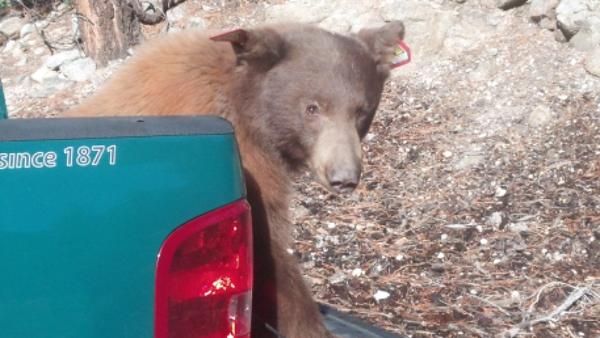 bear-10-16-13-thumb-600x338-62006