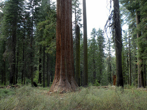 old-rtrees-climate-change-1-115-14-thumb-600x450-66980