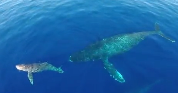 drone-dolphin-gray-whale-video-2-26-14-thumb-600x314-69497