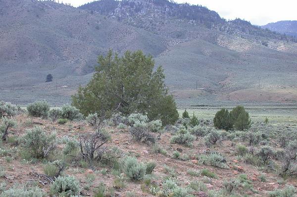 ivesia-habitat-2-2-13-14-thumb-600x398-68666