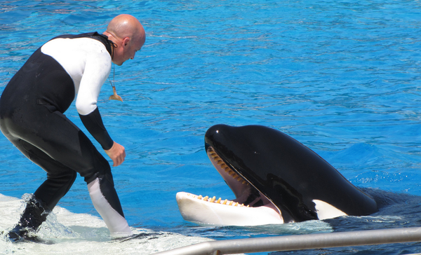 ban-orca-shows-3-11-14-thumb-600x364-70318