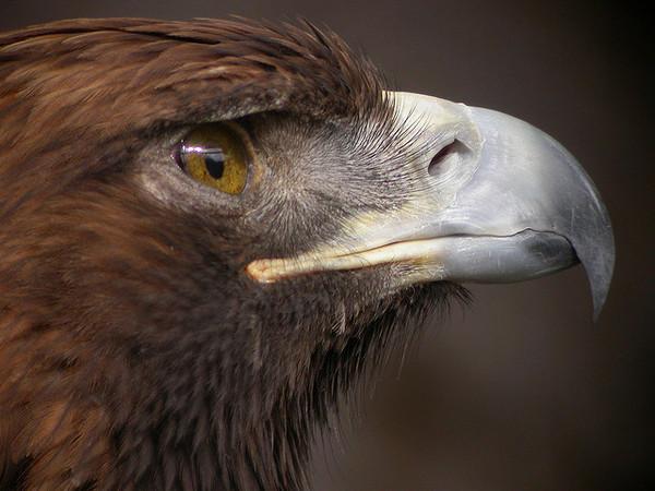 eagle-vision-ultraviolet-2-24-14-thumb-600x450-72846