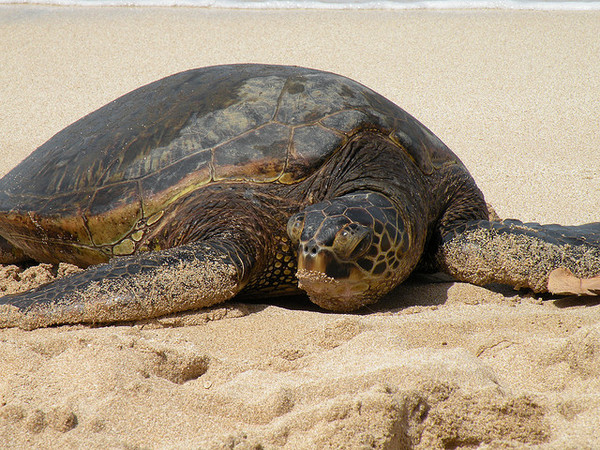 sea-turtle-4-28-14-thumb-600x450-73112