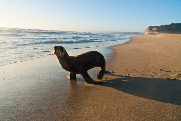 A sea lion on the shore.