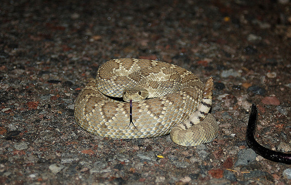 snakebite-season-6-13-14-thumb-600x381-75499