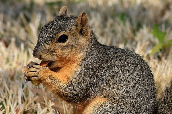squirrel-6-10-14-thumb-600x399-75352