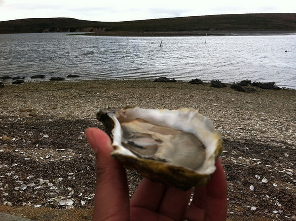 oyster-company-invasives-8-20-14-thumb-600x448-79329