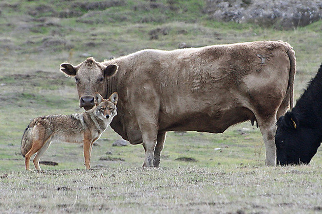 mendocino-county-wildlife-services-4-13-15-thumb-630x419-91111