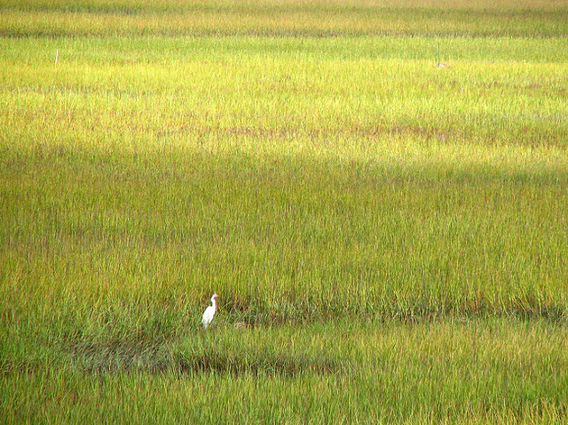 kendall-frost-mission-bay-marsh-reserve-thumb-630x472-92378