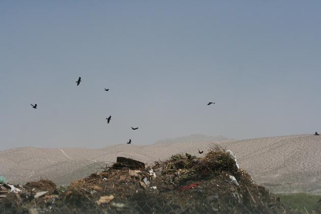 ravens-compost-laser-6-18-15-thumb-630x420-94176