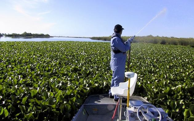water-hyacinth-7-1-15-thumb-630x394-94809